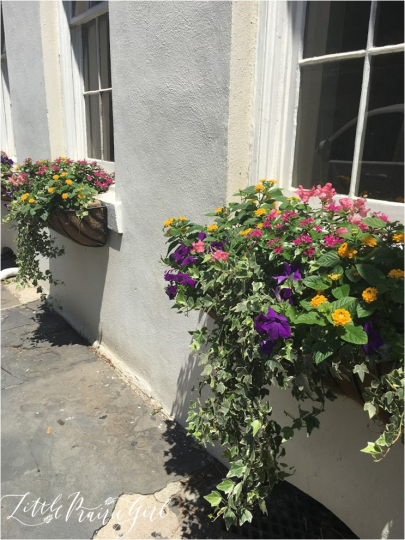 window box 1.jpg